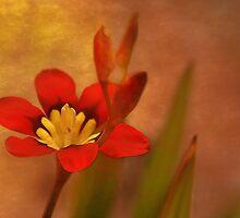 Such A Pretty Flower by CarolM