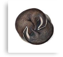 European Badger Canvas Print