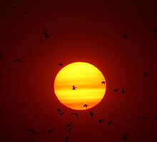 Flying into the Sun by Larry Trupp