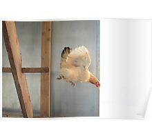 Graceful bird Poster