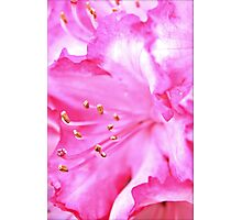 Pink Delicacy Photographic Print