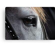 Romantic Horse Close Up Canvas Print
