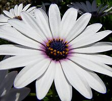 Spring Flowers Jan by Rowan Nancarrow