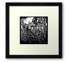 Squirrely Framed Print