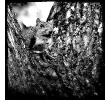 Squirrely Photographic Print