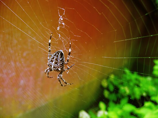 Boris The Spider by Martilena