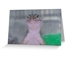 Please sir can I have some more ................................ Greeting Card
