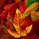 Autumn Collection by James Coard