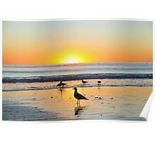 Sea Gull Silhouettes at Sunset Poster