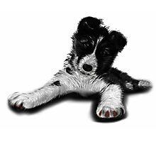Skye Old English Sheepdog Husky  Photographic Print