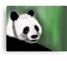 Panda Yang Guang  Canvas Print