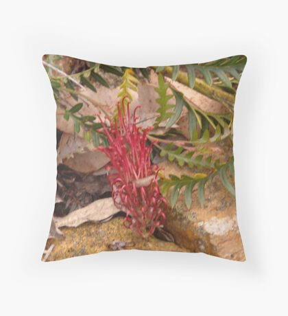 Proteaceae - Grevillea Boongala Spinebill Throw Pillow