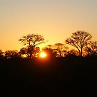 African Sunset by Kristiane Anderson
