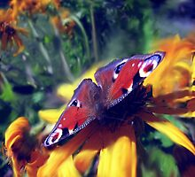 Peacock Butterfly by aila
