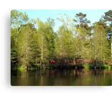 Spring Cypress Canvas Print