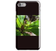 Rhododendron bloom iPhone Case/Skin