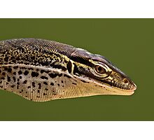 Papuan Sand Monitor Photographic Print