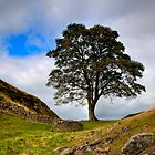 Sycamore Gap by Stewart Laker