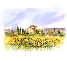 Sunflowers in Tuscany Photographic Print