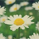 daisy. by immunetogravity