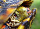Late Summer Find: T for Turtle, Threatened by Carla Wick/Jandelle Petters