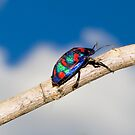 Harlequin Bug by Vanessa Pike-Russell
