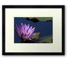 Tina Water Lily Framed Print
