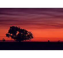 Kurrajong Sunset Photographic Print