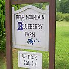 Bear Mountain Blueberry Farm by Outdoors2