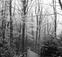 Frosty Woodland Path by Rosie Connor