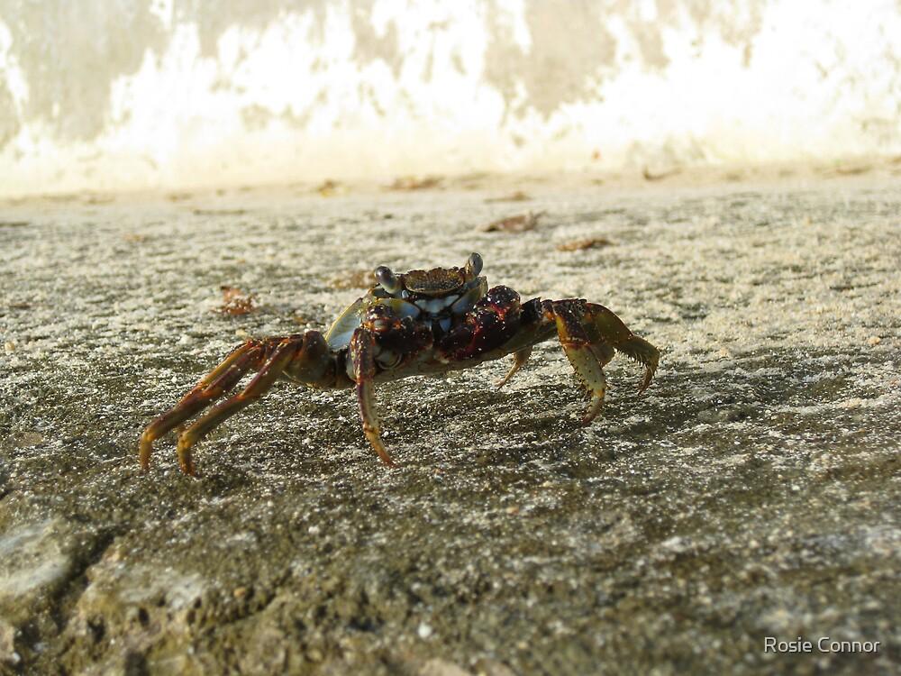 Mr Crab by Rosie Connor