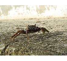 Mr Crab Photographic Print