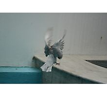 PIGEON IN FLYING PRAYER Photographic Print