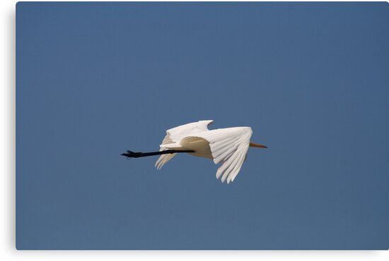 Graceful in Flight by Virginia N. Fred