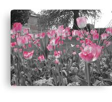 A Hint Of Pink Canvas Print