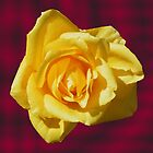 Yellow rose. by BlikART