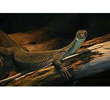 Regal Reptile Photographic Print