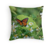 Viceroy Butterfly - Limenitis archippus Throw Pillow