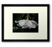 Little Rain on White Flower Framed Print