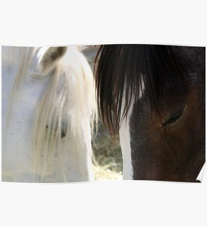 Equine eyes.... Poster