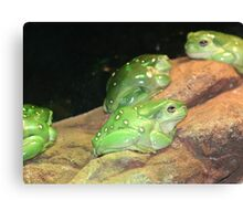 Frogs Frogs and More Frogs Canvas Print