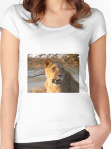 Lioness at sunset, Zimbabwe Women's Fitted Scoop T-Shirt