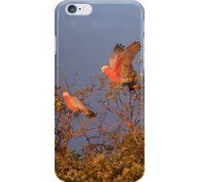 Gallah Tree iPhone Case/Skin