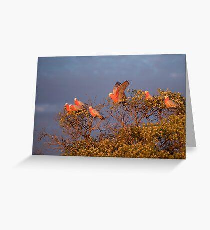 Gallah Tree Greeting Card