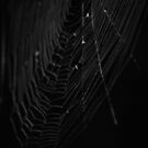 Web by J. Sprink