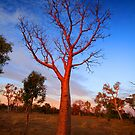 """Boab Sunset"" The Kimberley, Western Australia by wildimagenation"