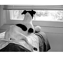 Terrier Watchtower  Photographic Print