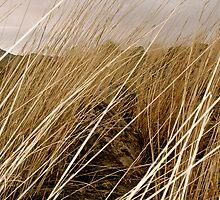 Grass Part 1 by Jhon LeBaron