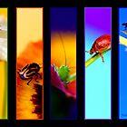 A Bug's World  by  DEBBIE STEER Photographed in Tasmania  Australia by Debbie Steer