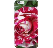 A Red and White Rose iPhone Case/Skin
